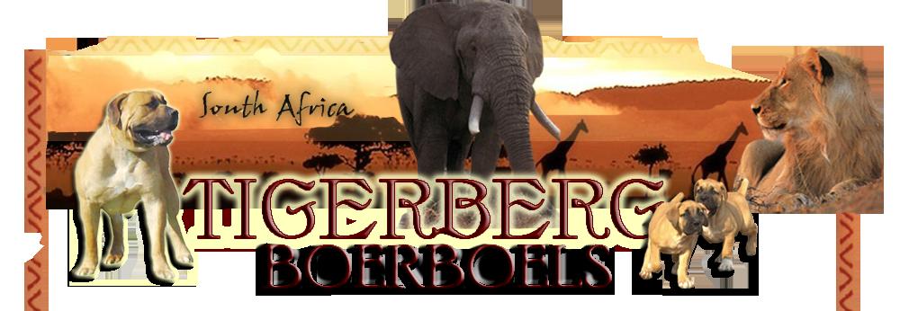 Tigerberg Boerboels